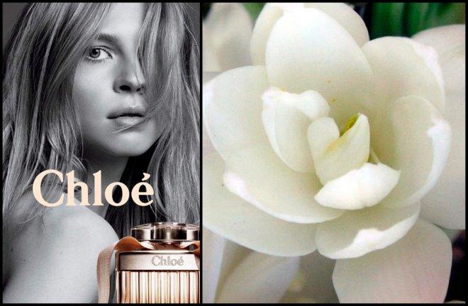 Цветы тубероза и ароматы Chloe