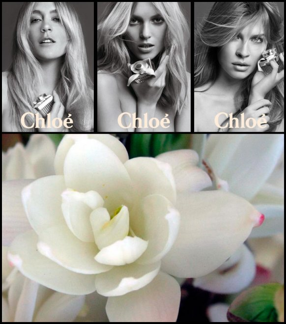 ароматы Chloe
