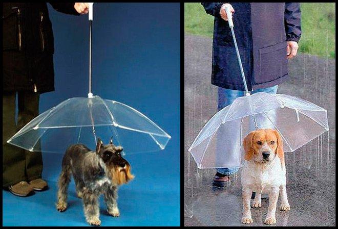 зонтики для собак