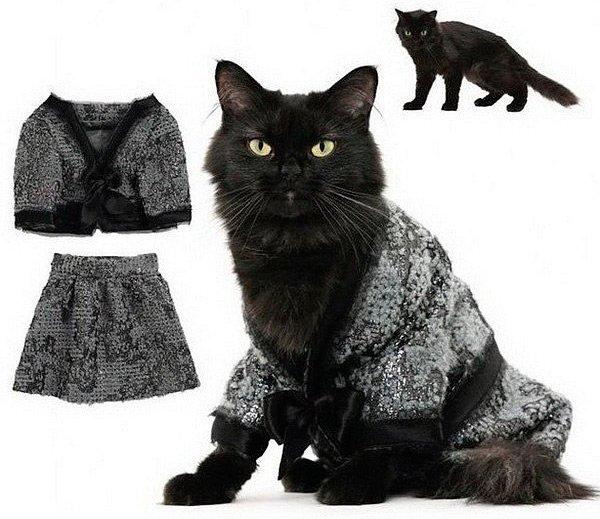 Стильный гардероб для кошки