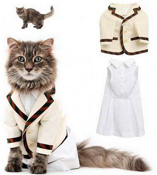 Одежда и аксессуары для кошки