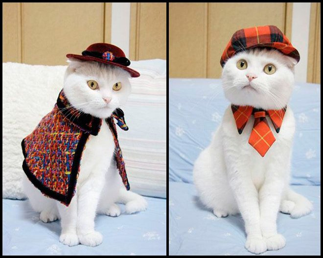 Одежда для стильных кошек