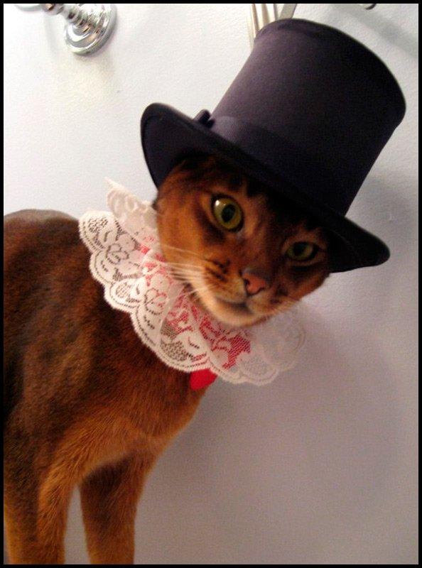 Картинки по запросу Очень стильные кошки