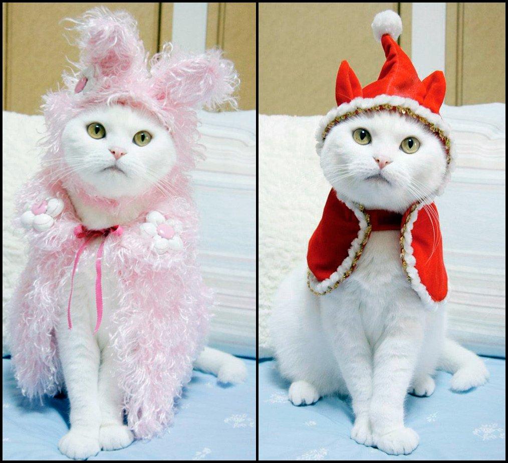 Аксессуары для кошек своими руками