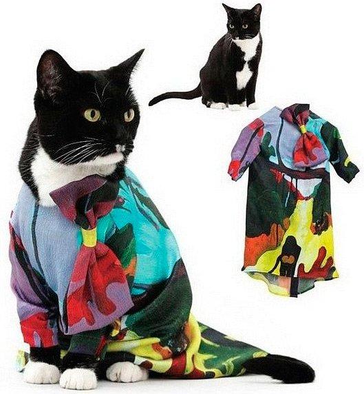 кошки фото в оригинальной одежде