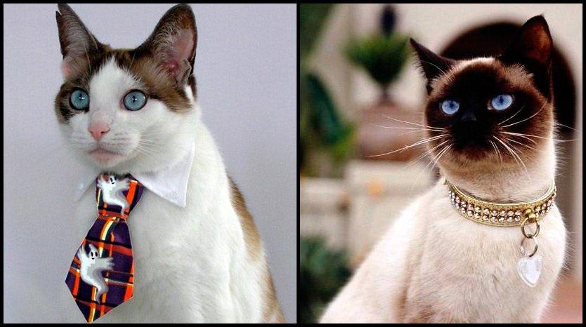 Украшения с котами фото