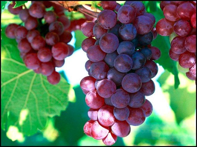 Масло виноградных косточек для женщин и мужчин