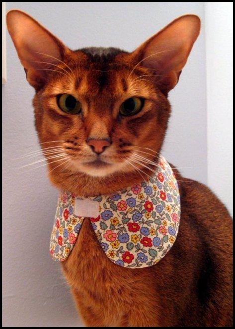 Кошки и одежда для кошек