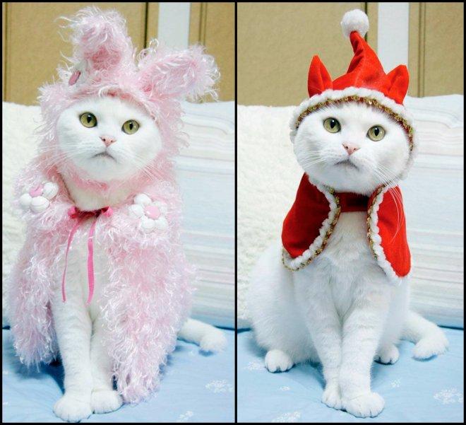 Одежда и украшения для кошек сделанные своими руками