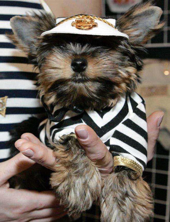 Московская неделя моды для кошек и собак