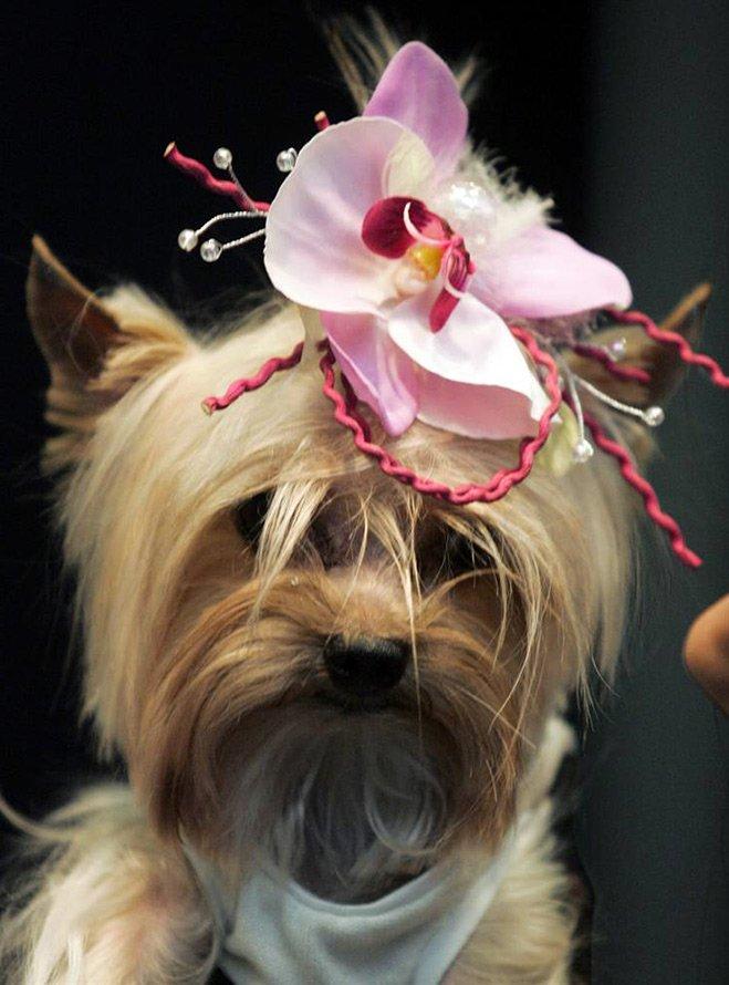 Неделя моды для домашних животных