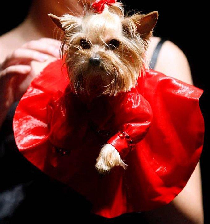 Pet's Fashion Week Russia, неделя моды для домашних кошек и собак