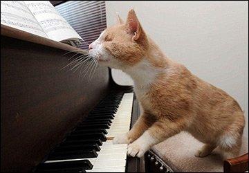 Сумка пианино для творческих девушек