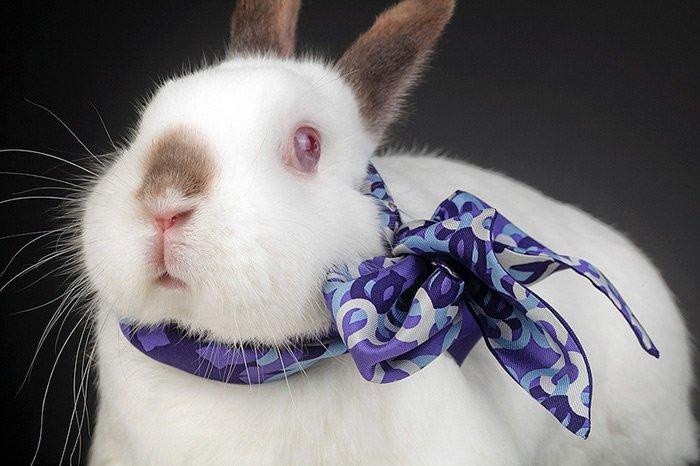 Завязываем шарф для кролика фото