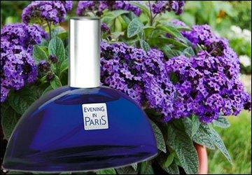 Аромат цветка гелиотропа в парфюмерии