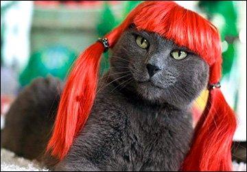 Одежда и украшения для стильных кошек
