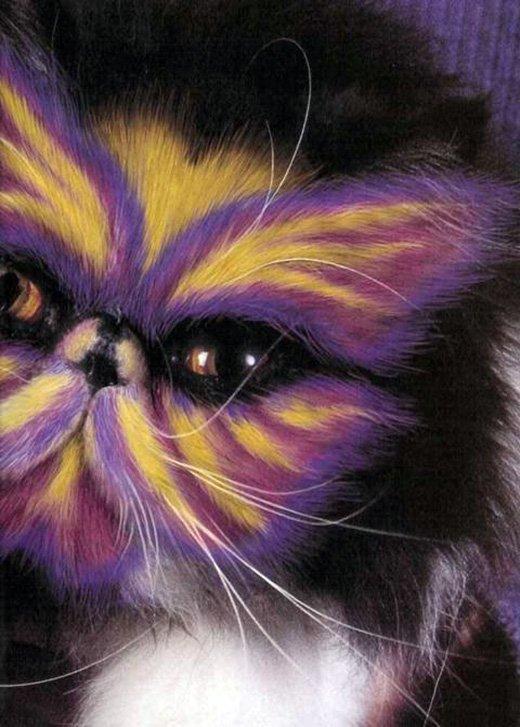 Кошка враг модницы!