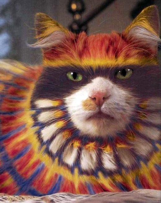 Цветной разрисованный кот, фото