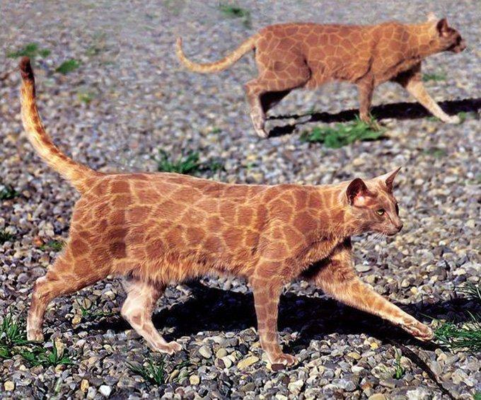 разрисованные  кошки, фото