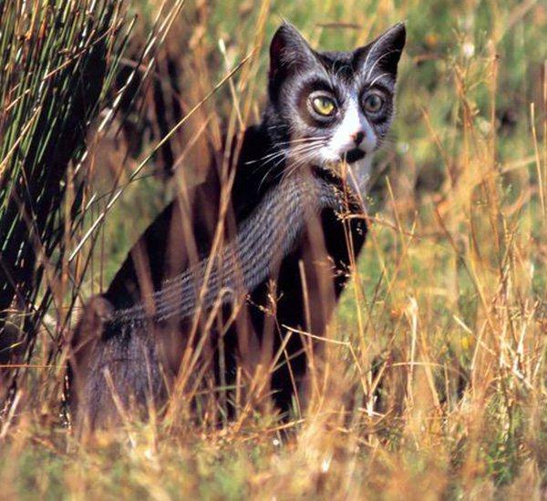 Реально гламурный кот, фото кота
