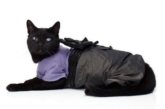 Красивая кошка в одежде, фото