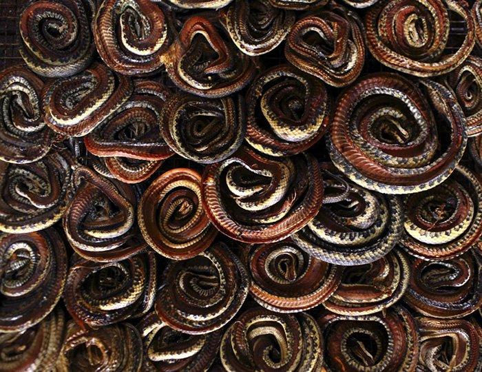 Змеиная кожа в процессе производства