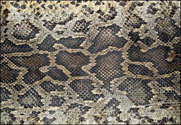 Женские сумки из змеиной кожи