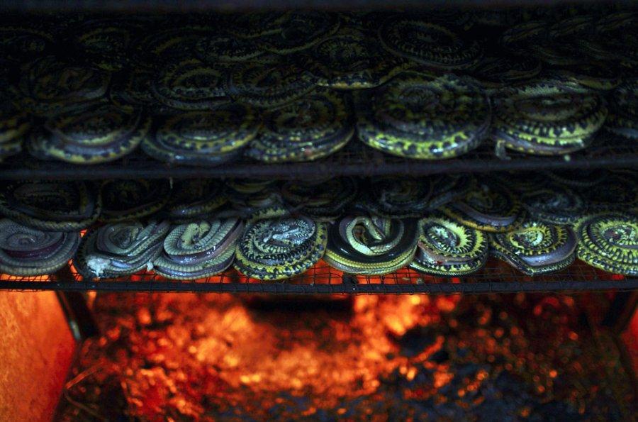 Изготовление змеиной кожи для модных сумок