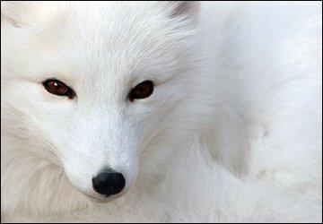 Меховые шубы и защита животных