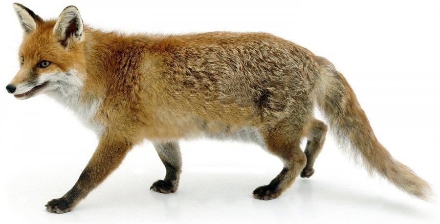 Меховые шубы и защита животных фото