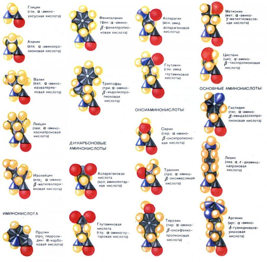 Выбираем крем для лица - Аминокислоты