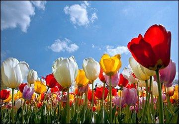 Майские праздники 2013