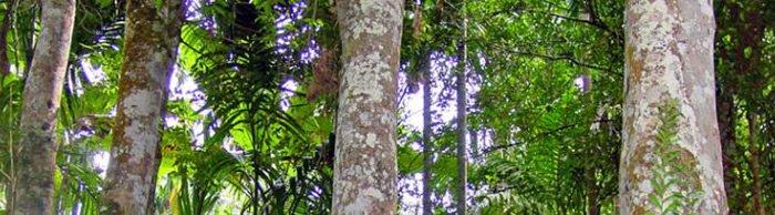 Удовое масло, дерево фото