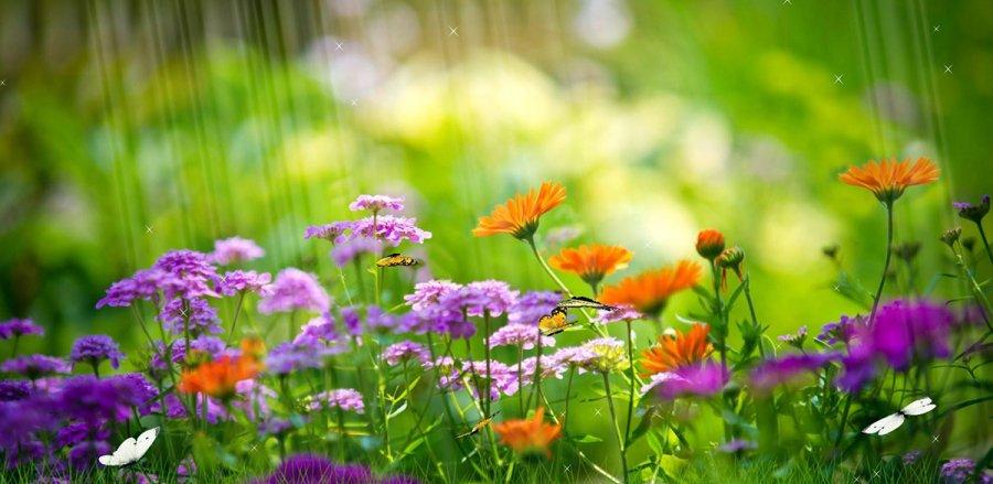 Лучшие летние ароматы для женщин и мужчин фото