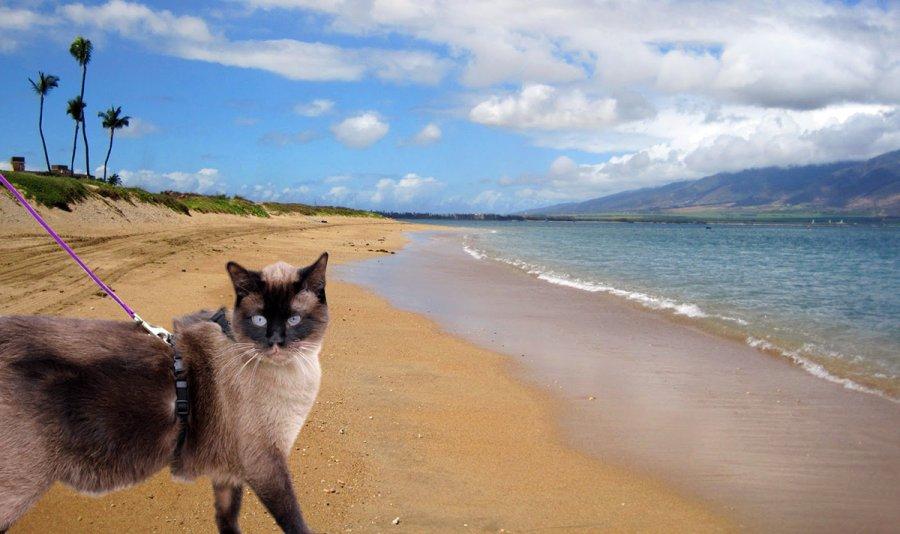 сколько можно загорать на пляже кошкам