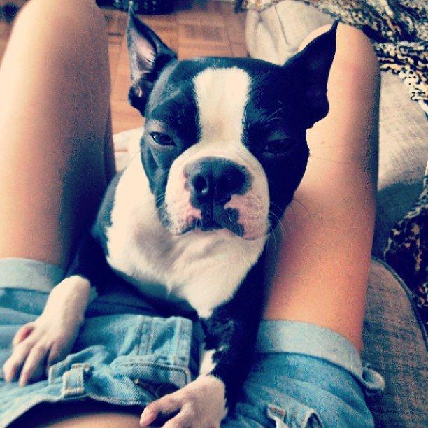 Топ-модель Catherine McNeil, фото с собакой