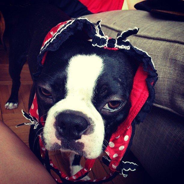 собачка модели Catherine McNeil