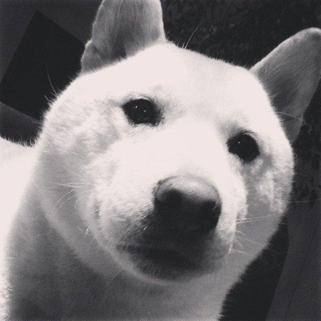 Фото собаки со страницы Andreea Diaconu