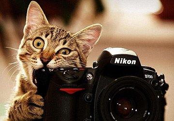 Модная фотосессия для кошки