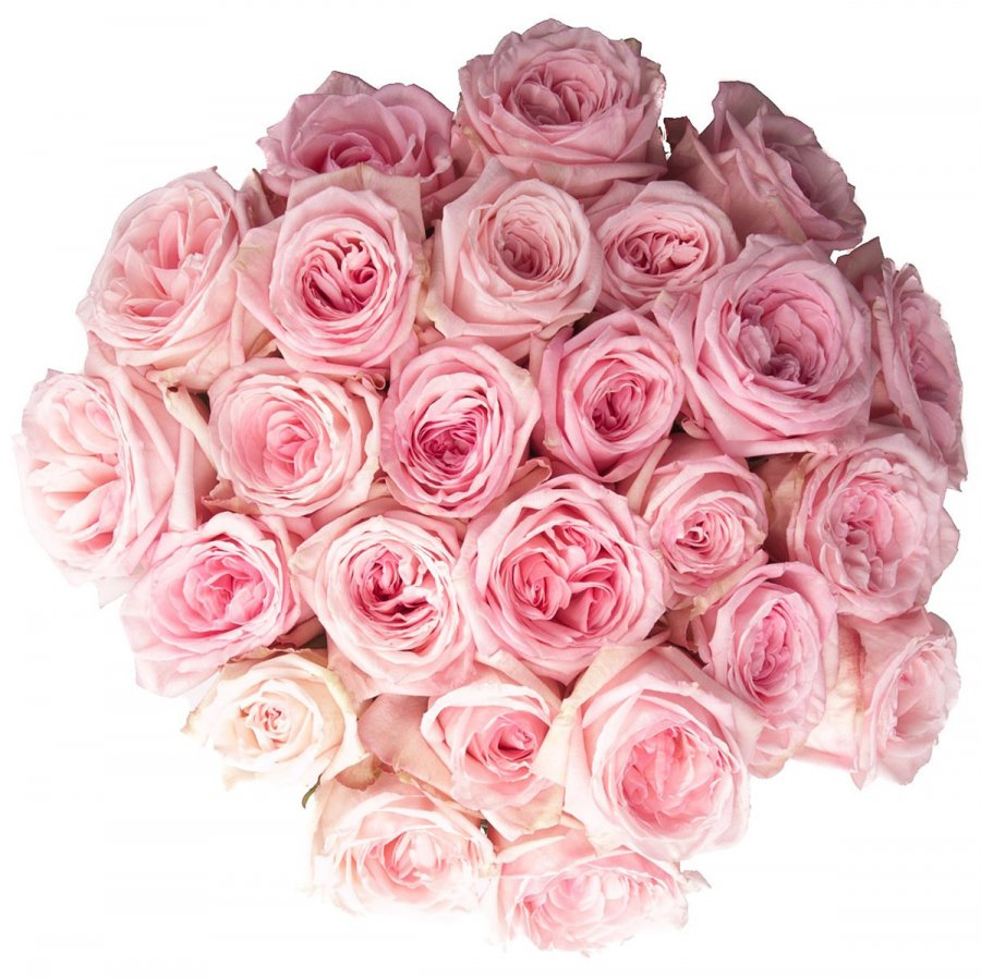 Розовые розы, фото