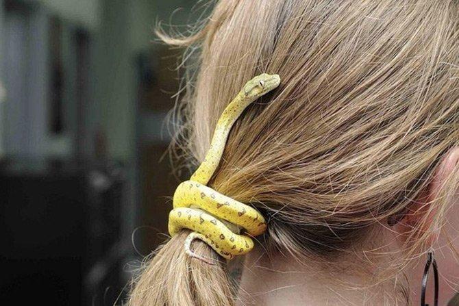 Змея в аксессуарах для волос