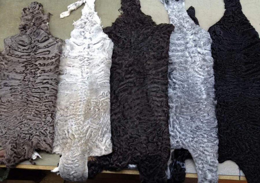 Черный, белый, коричневый, серый каракуль
