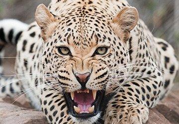 Леопардовый принт для мужчин