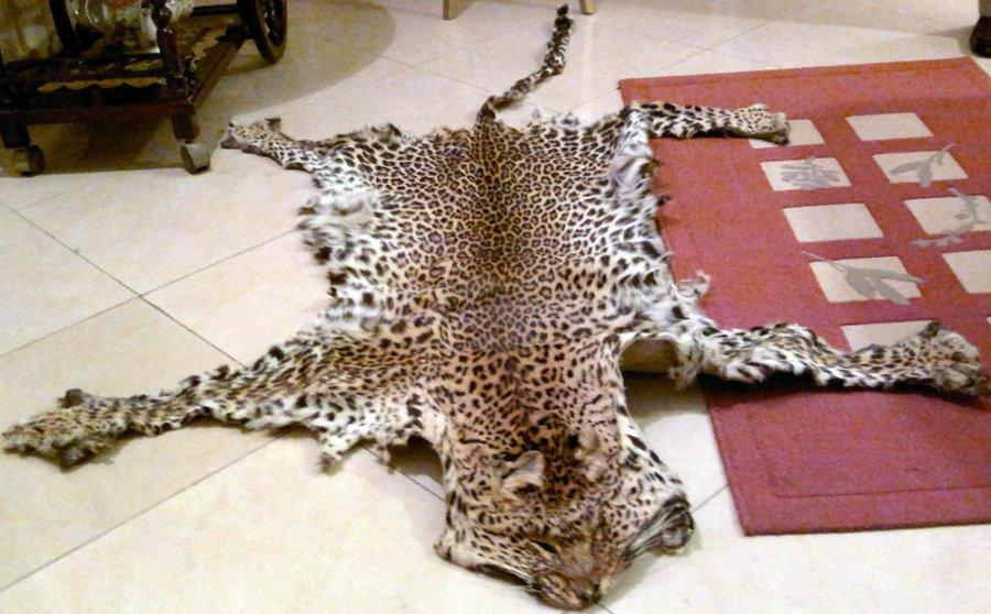 Натуральная шкура леопарда, фото