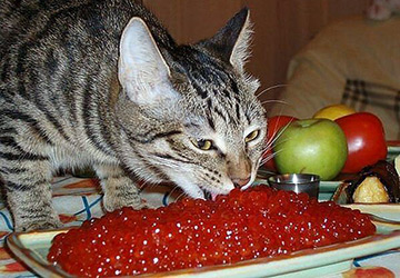 Беспородный кот за 300.000 рублей!