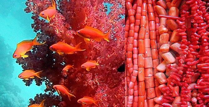 Розовые и коралловые платья 14-15