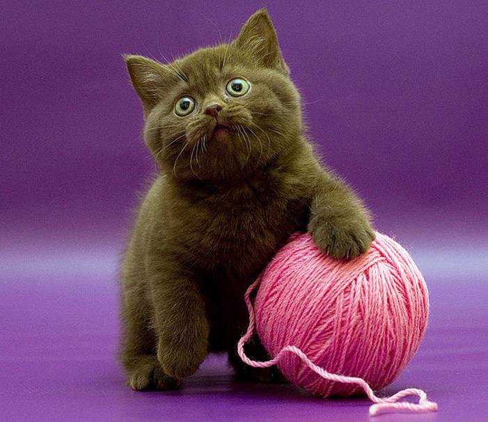 Дорогие свитеры или свитер на заказ?