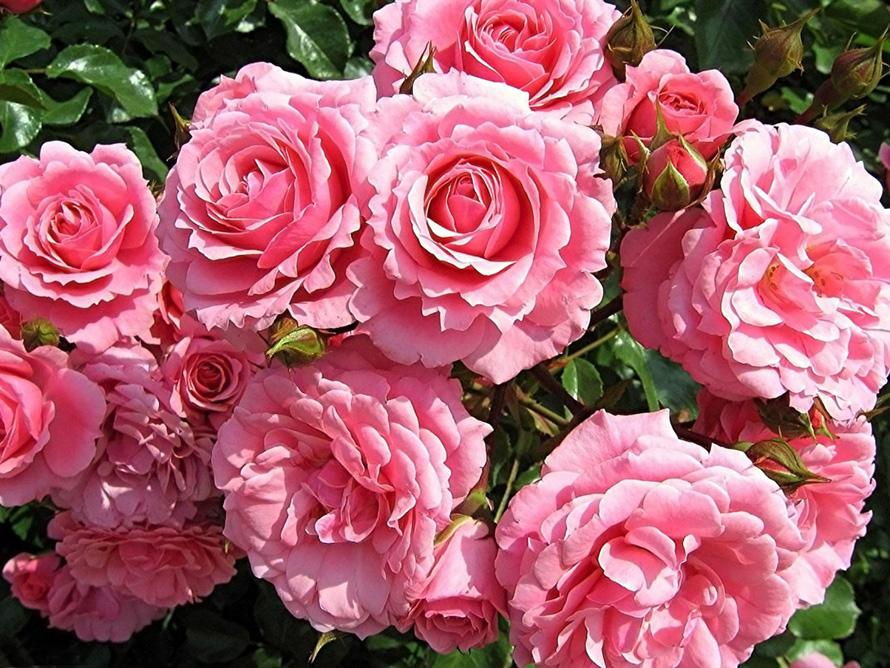 восточные розы