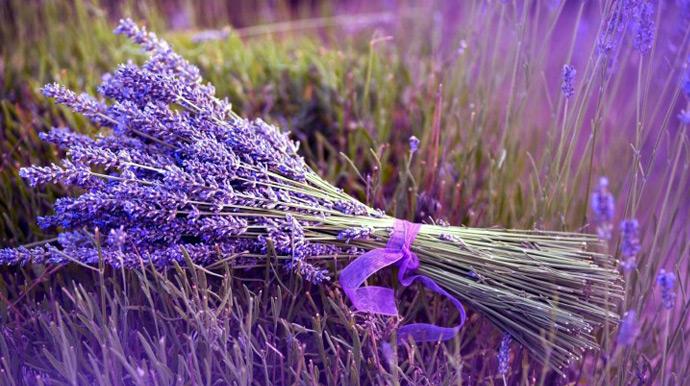 Фиолетовый в природе