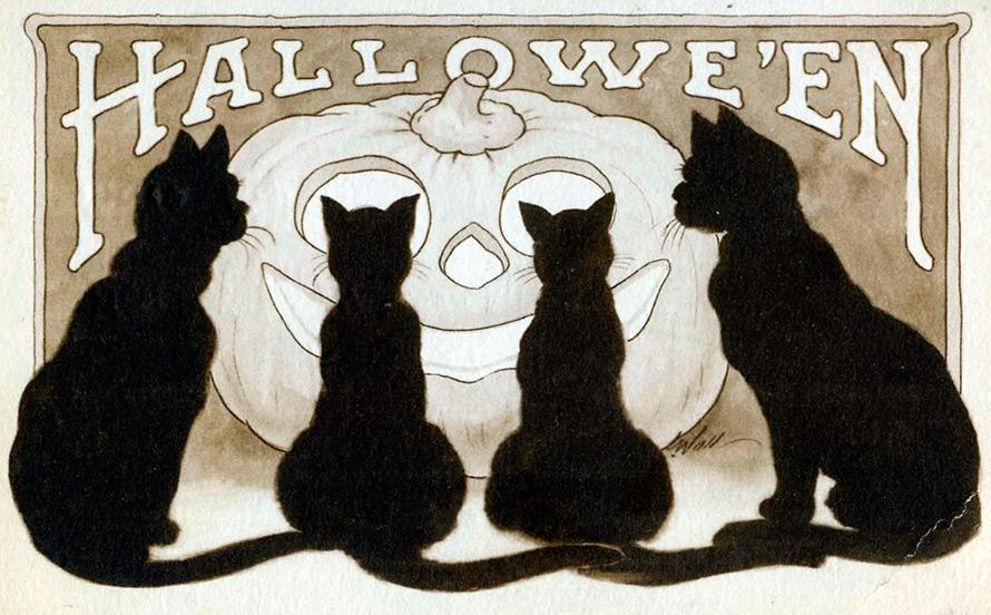 Черные котики на Хэллоуин